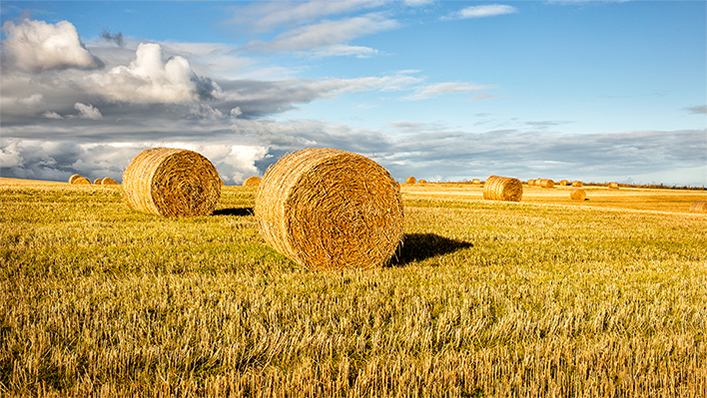 OMC | agricultura - portada